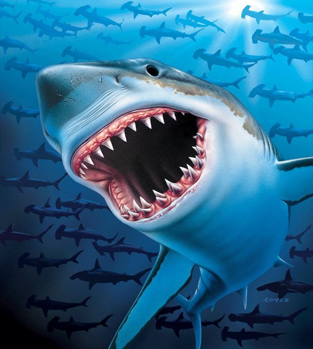 High quality wallpapers and fabrics Mural Shark EV1353 Decowunder