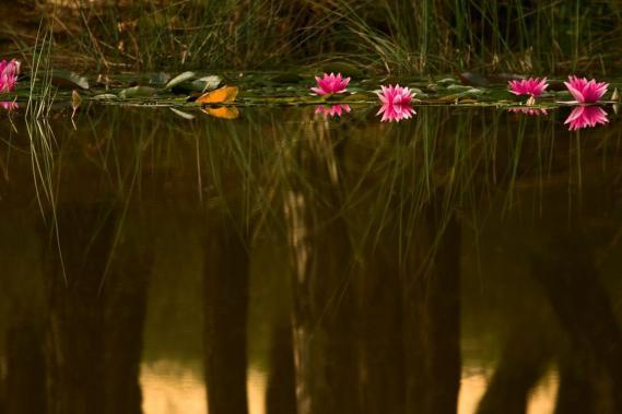Fototapete mit Lagune 0312-5