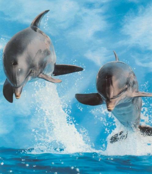 Mural Dolphins EV1018