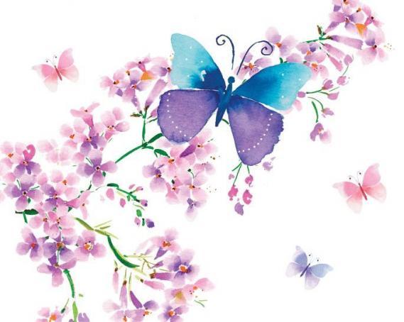 Fototapete Schmetterling EV1369